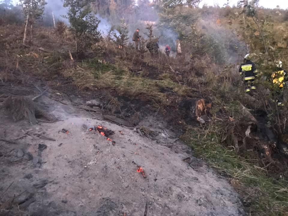 Przez ponad 3 godziny strażacy gasili pożar lasu