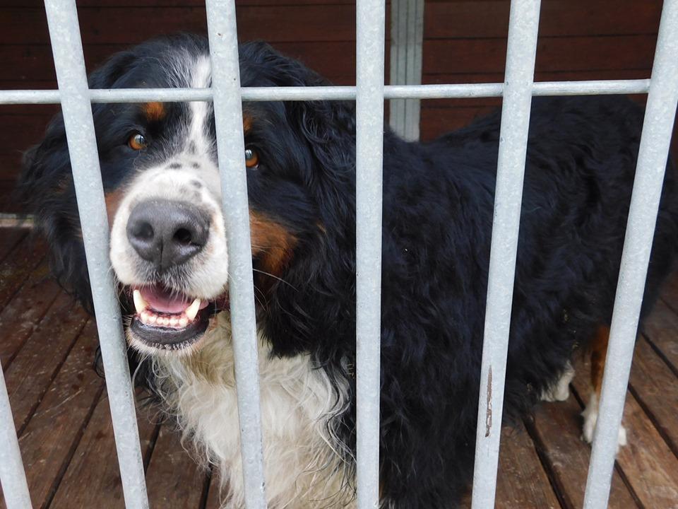 Przyjdź, poznaj, pokochaj. Bezdomne zwierzęta czekają na dom!