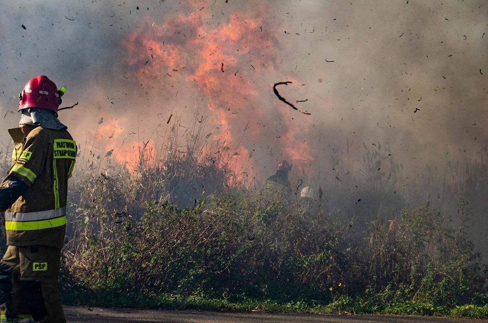 Ogromny pożar suchej trawy! Akcję gaśniczą utrudniał silny wiatr