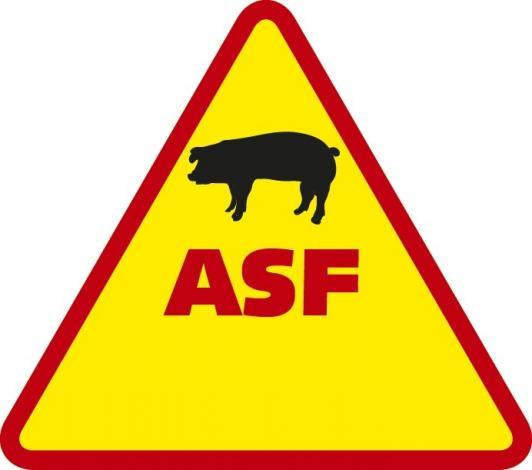 ASF zabija dziki. Zagrożona jest trzoda chlewna!