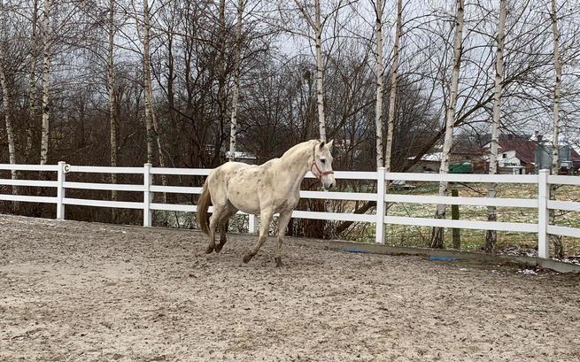Apel o pomoc dla koni, które miały trafić do rzeźni. Ruszyła zbiórka