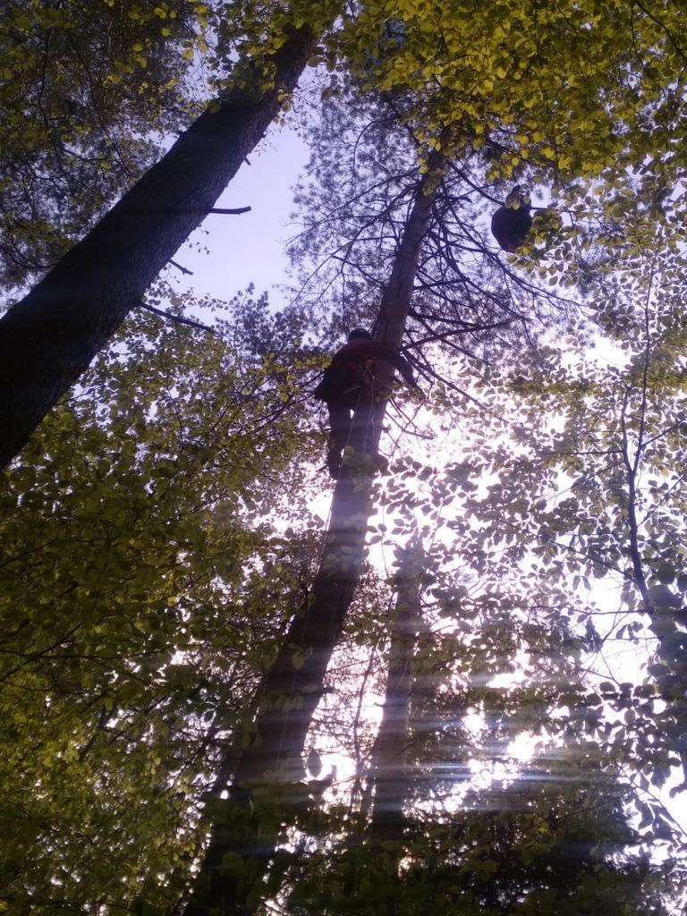 70-letni paralotniarz utknął na wysokim drzewie