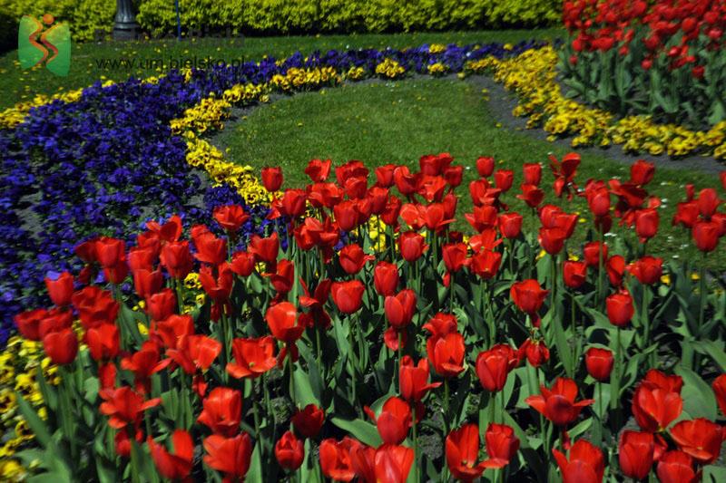 Bielsko-Biała w kwiatach. Trwają prace na terenach zielonych [FOTO]