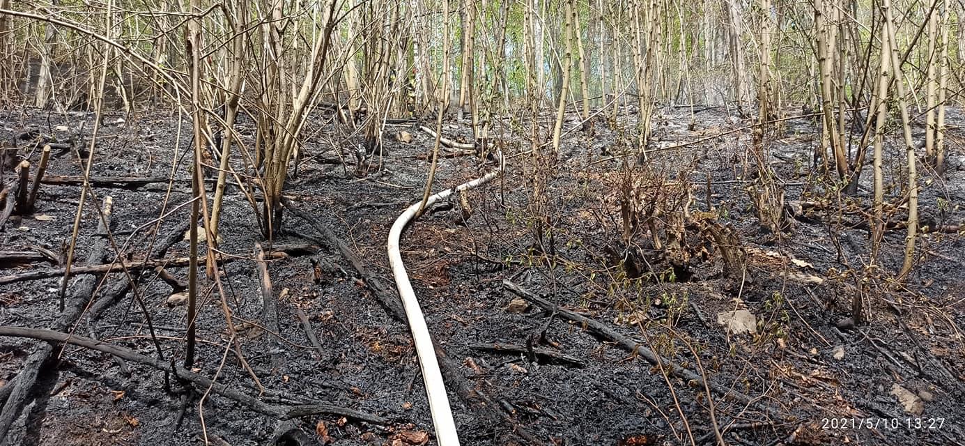 Strażacy gasili pożar lasu