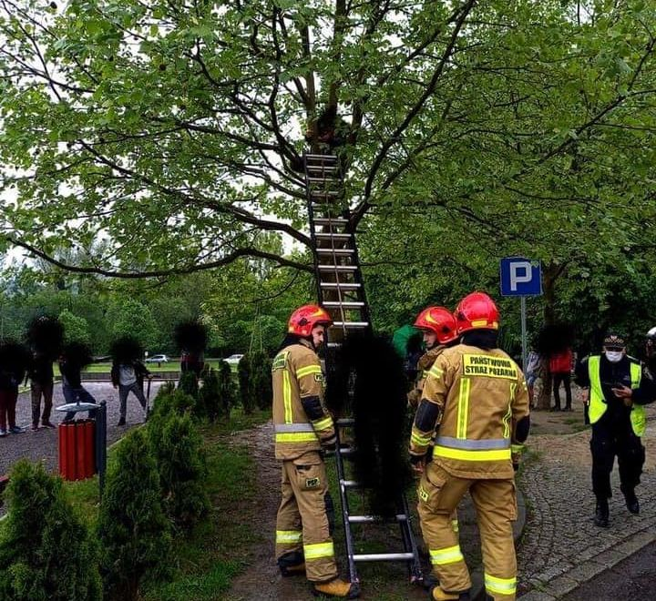 Strażacy ewakuowali chłopców z drzewa