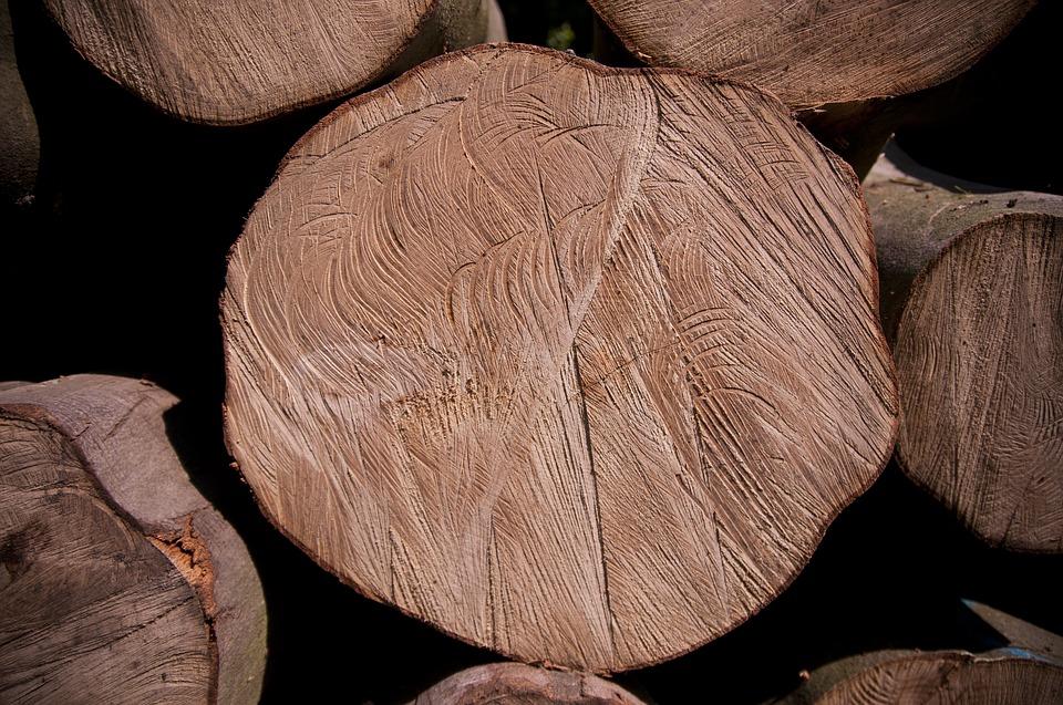 Nie chcą wycinki drzew, pod petycją podpisało się 5000 osób