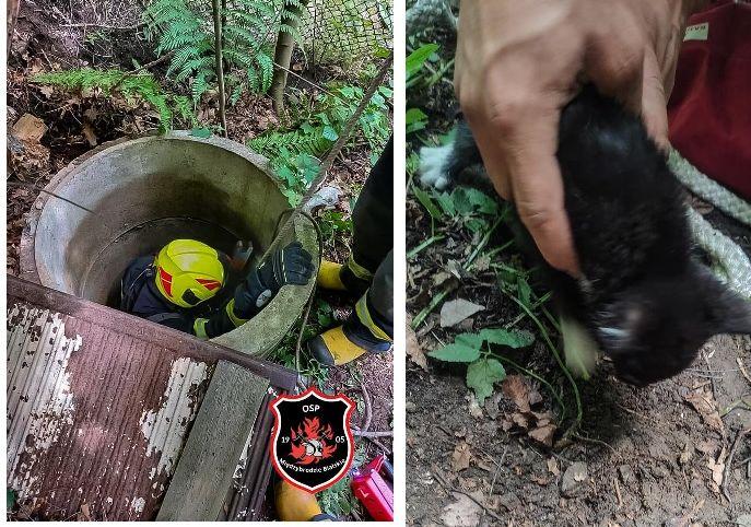 Strażacy uratowali kota, który wpadł do 7-metrowego szamba