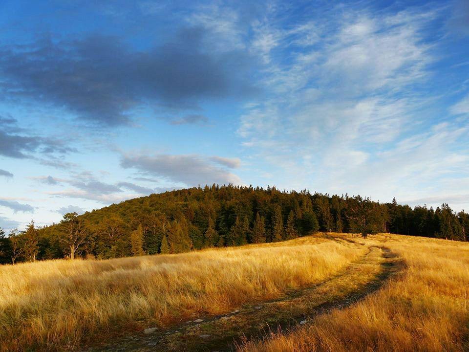 Las uratowany, nie powstanie kolejna narciarska inwestycja w górach [AKTUALIZACJA]