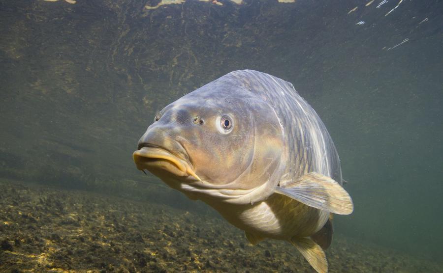 Tam naprawdę są taaakie ryby